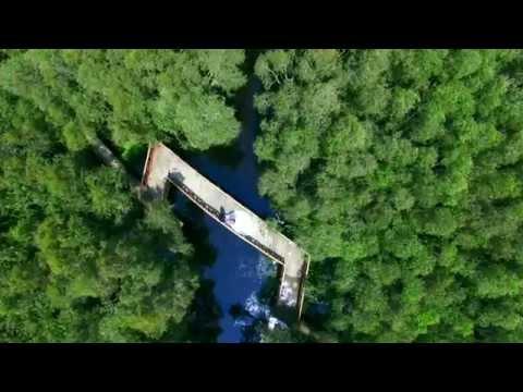 Video clip cưới rừng tràm Tân Lập, Long An