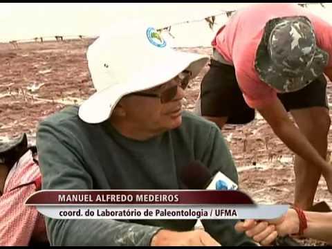 Pesquisadores resgatam fósseis de dinossauros, em Cajapió
