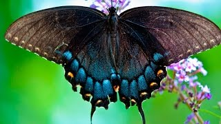 Beautiful Butterfly World Красивые бабочки мира YouTubeFotoVideo