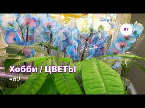 97#60 / Хобби-Цветы / 13.09.2018 - CASTORAMA + ГИПЕРМАРКЕТ ГЛОБУС (Г. ЩЕЛКОВО) (видео)