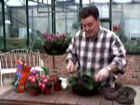 Hoggywart - One of the best ways to add summer colour to your garden or patio is with hanging baskets. Now is the perfect time to plant up baskets in order to give the p...
