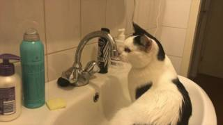 Carlos the Cat washing up