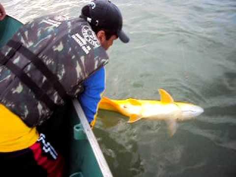 Pescadores de Dourado - Cascalho Rico / Represa Emborcação