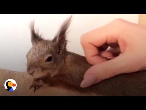 una-vita-da-scoiattolo-domestico