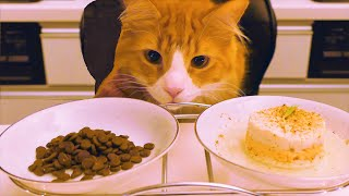 Homemade VS Instant Cat Food