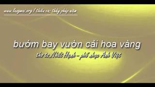 Bướm Bay Vườn Cải Hoa Vàng - Thiền Ca