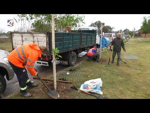 Día Mundial del Medio Ambiente: Plantaron árboles en plaza Terra
