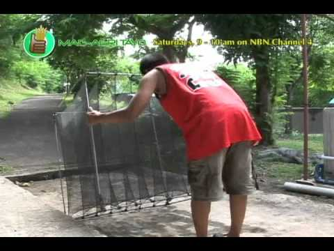Southeast Asian Fisheries Development Center (SEAFDEC): Ulang (Freshwater Prawn) Hatchery Part 2
