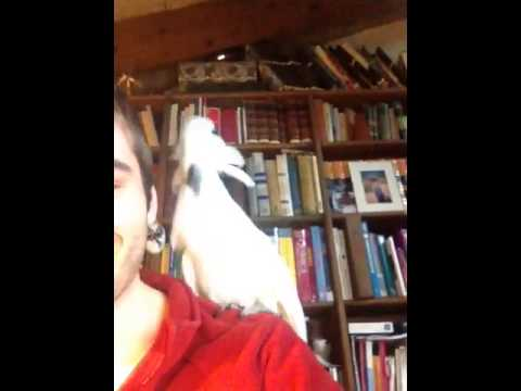 WATCH: Cockatoo Grooves to Daft Punk