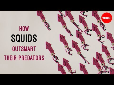 How Squids Cleverly Avoid Attacks from Predators