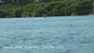 Hawks Nest Australia  city images : Weekend with dolphins at Hawks Nest, Australia