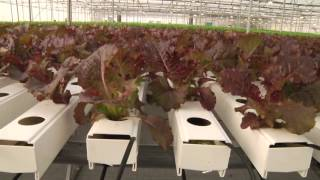 Teshuva Agricultural Projects - Hydroponics