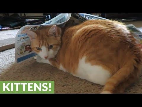 il-gatto-ossessionato-dai-giornali