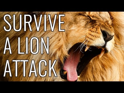 Video Survive A Lion Attack - EPIC HOW TO download in MP3, 3GP, MP4, WEBM, AVI, FLV January 2017