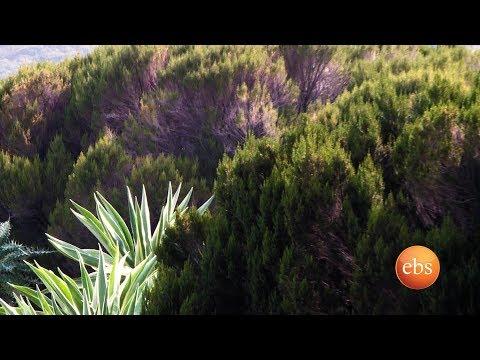 Discover Ethiopia Season 1 EP 10: Senan Woreda / ስናን ወረዳ/ Mount Choqa / Gojjam Continuity