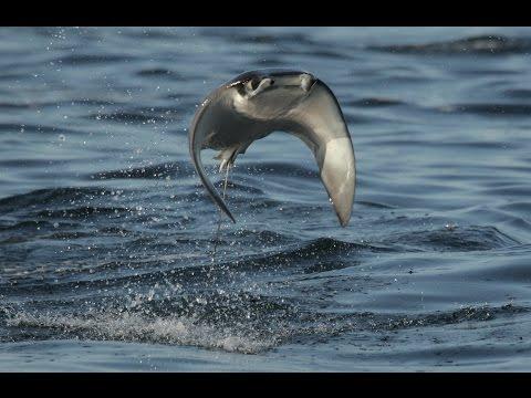 攝影師在海洋上空拍到一片黑壓壓的生物密集聚在一起,鏡頭放大時下一秒就出現令人窒息的景象…