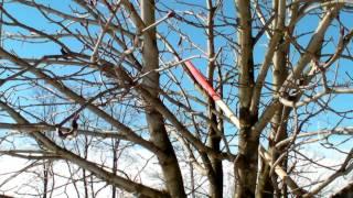 #310 Schneiden im Garten 2011 - Obstbäume in Doren Bregenzerwald 6v8 (Kastanie schneiden)