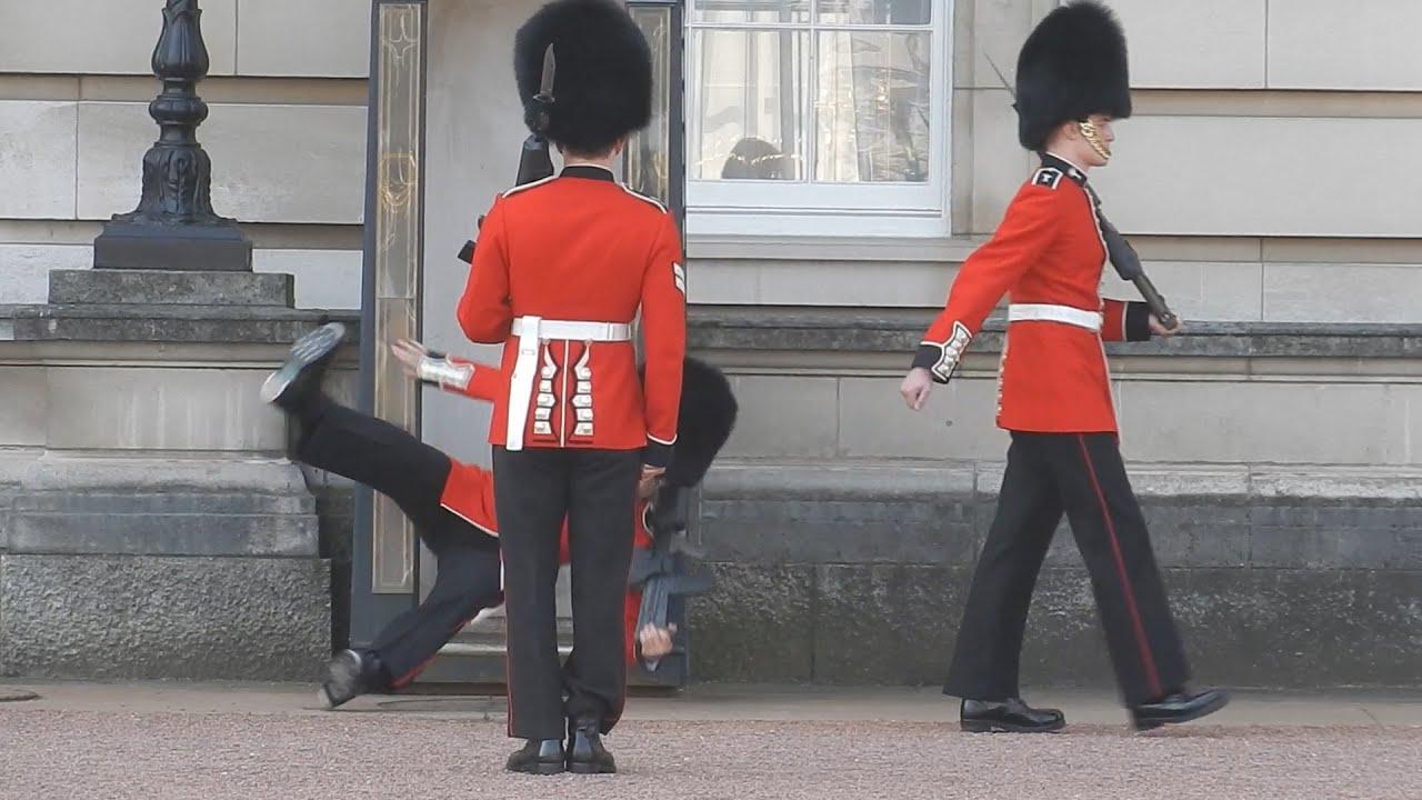 Ups: Pao čuvar Bakingemske palate