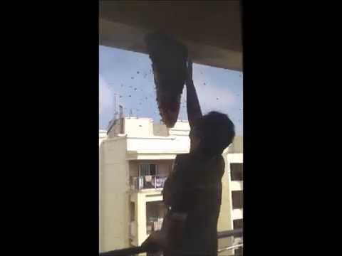 Bee Hive Removal- Indian Style