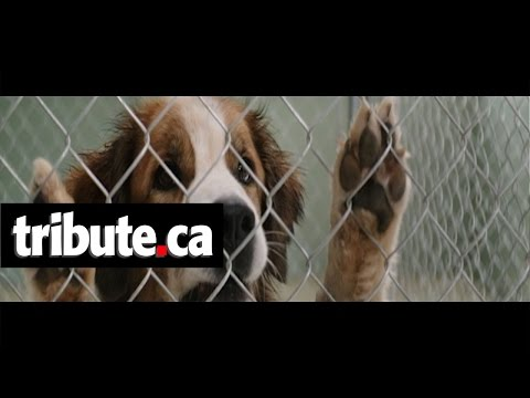 A Dog's Purpose (Clip 'Ethan Finds Bailey at Pound')
