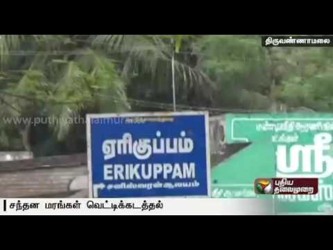Sandalwood-trees-worth-rupees-five-lakhs-cut-and-stolen-by-miscreants-in-Thiruvannamalai