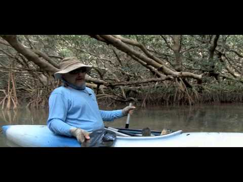 Waterways Episode 275 - Life in the Mangroves