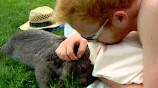 Chummy Wombat Loves Tummy Rubs