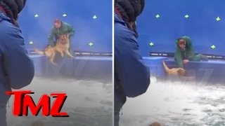 Nonton A Dog S Purpose  Terrified German Shepherd Forced Into Turbulent Water   Tmz Film Subtitle Indonesia Streaming Movie Download