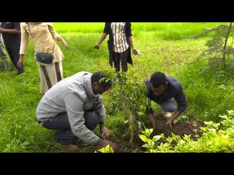 Äthiopien: 350 Millionen Bäume an nur einem Tag gepfl ...
