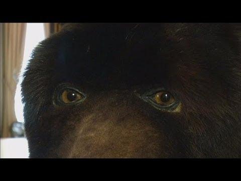 Abraham Poincheval - 2 semaines dans la peau d'un ours, 2014
