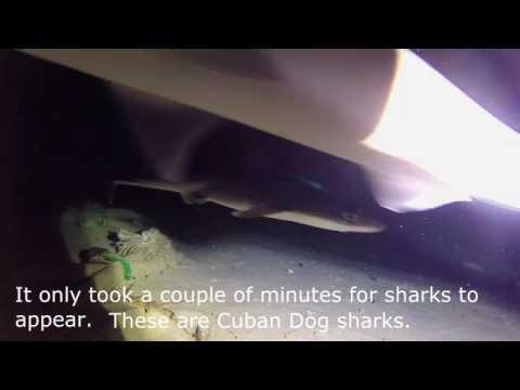 Speel Substation Curacao - Duiken met haaien af