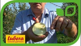 Die Züchtung samenloser resistenter Apfelsorten bei Lubera®
