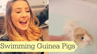 Swimming Guinea Pigs Previous Vlog: http://bit.ly/1JRTC1D Main Channel: http://bit.ly/1KSrBJ1 Other Places To Find Me: MAIN ...