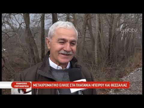 Μεταχρωματικό έλκος στα πλατάνια Ηπείρου και Θεσσαλίας | 23/01/2019 | ΕΡΤ