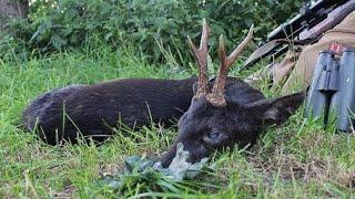 Video Jagd auf einen schwarzen Rehbock / hunting for a black roebuck - Hunter Brothers MP3, 3GP, MP4, WEBM, AVI, FLV Agustus 2017