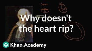 LaPlace (LA) United States  city images : Why doesn't the heart rip? | Circulatory system physiology | NCLEX-RN | Khan Academy