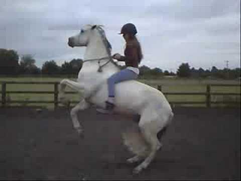 Tricks & Trick Riding