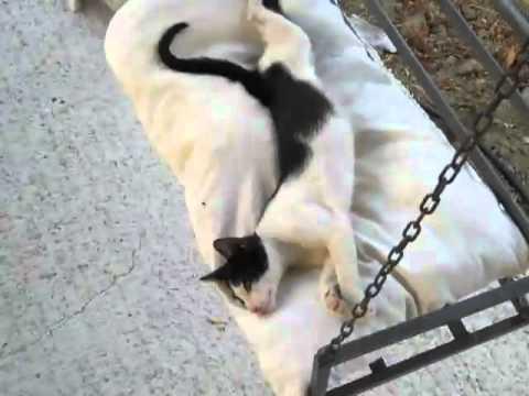 gatto bianco e nero sul dondolo