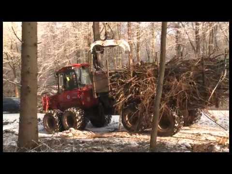 Ausbau des Radweges entlang der B 104: Bäume müssen weichen