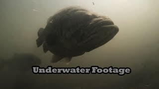 Video Delta Bed Fishing For Giant Bass: Underwater Footage MP3, 3GP, MP4, WEBM, AVI, FLV Januari 2019