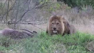 Video TOP 5 Scariest Animals Charging MP3, 3GP, MP4, WEBM, AVI, FLV Januari 2019