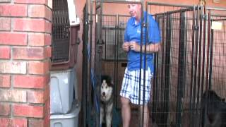 Severely Agressive Dog On Death Row Meets The Miami Dog Whisperer - PART 2