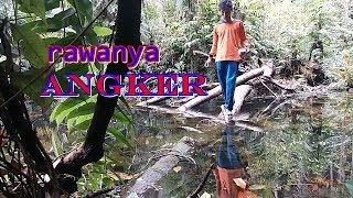 Video FISHING IN BORNEO FOREST II mancing  ke  hutan kalimantan MP3, 3GP, MP4, WEBM, AVI, FLV Maret 2019