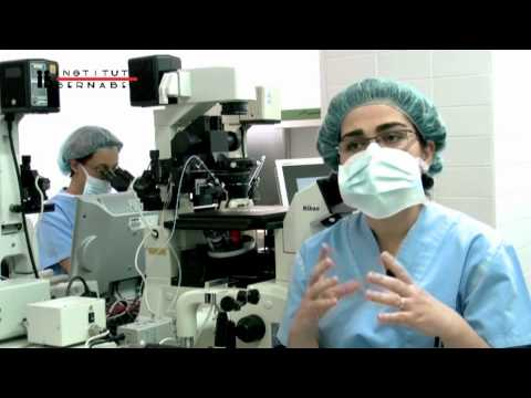 Blastocisto, ventajas de la transferencia embrionaria en día 4 o 5