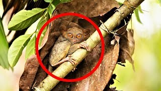 MOST BIZARRE Monkey Species by Epic Wildlife