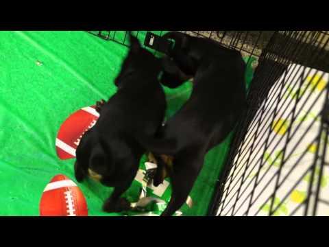 2014 Puppy Bowl