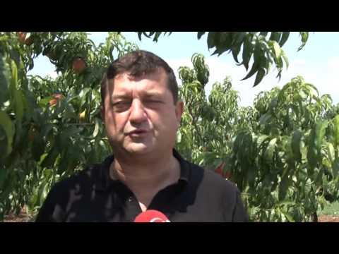 Bursa Sebze Meyve  23 Haziran 2015