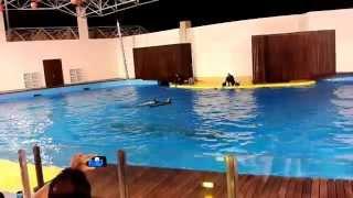 Video Dolphin Show  in Jeddah, Fakieh Aquarium, Saudi Arabia MP3, 3GP, MP4, WEBM, AVI, FLV Juli 2018