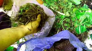 Video Cara pembuatan pupuk kompos limbah dapur, rumput dan daun dengan kantong plastik MP3, 3GP, MP4, WEBM, AVI, FLV September 2018