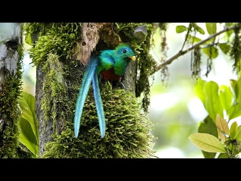 The Natural Beauty of Costa Rica